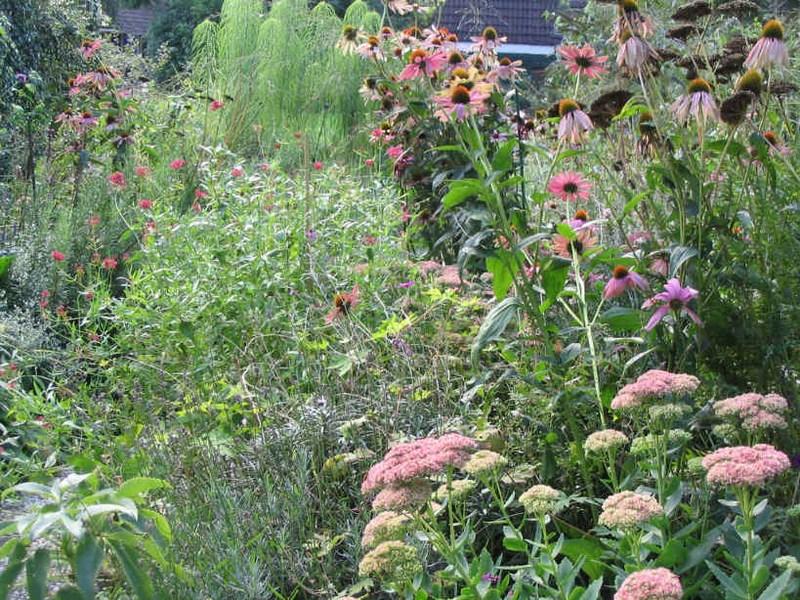 Beplantingsplan voor een bloementuin in monnickendam for Www bloem en tuin nl